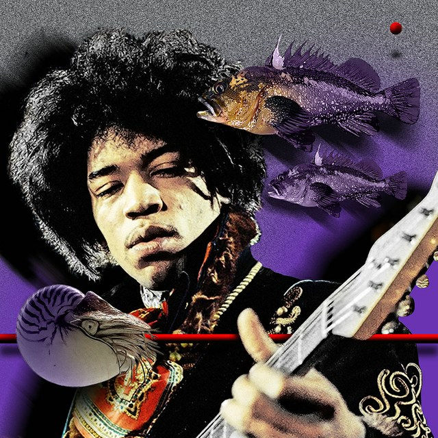 Jimi Hendrix - slika Zorana Mujbegovica