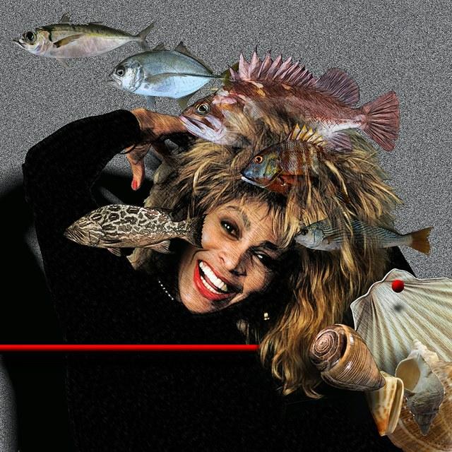 Tina Turner - slika Zorana Mujbegovica
